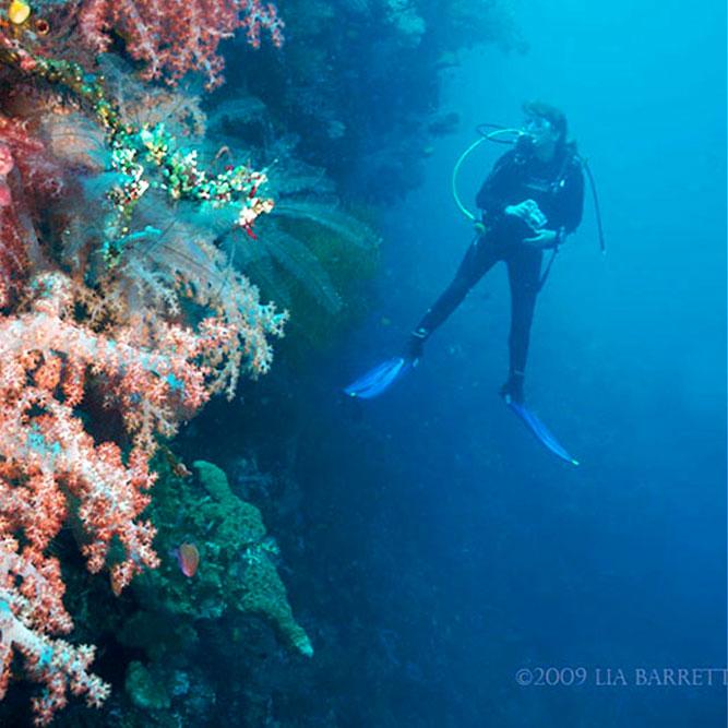kubu reef