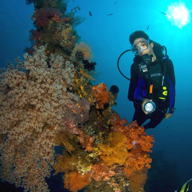 tulamben coral garden