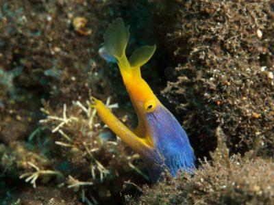 bali tulamben underwater photgraphy